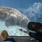 Линкольн Парк — главный зоопарк Чикаго
