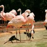 Фламинго в заповеднике США