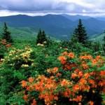 Штат Северная Каролина