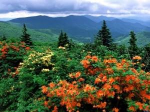 Природа_штат_Северная_Каролина