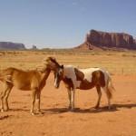 Лошади в национальном парке «Долина монументов»