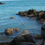 Пеликан на острове Ки Вест в Майами