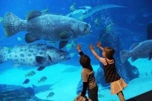 Дети_на_экскурсии_в_аквариуме_Джорджии