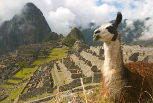Лама_на_фоне_Мачу-Пикчу_в_Перу