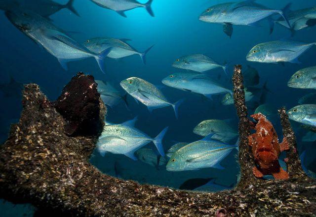 Подводный_мир_острова_Кокос