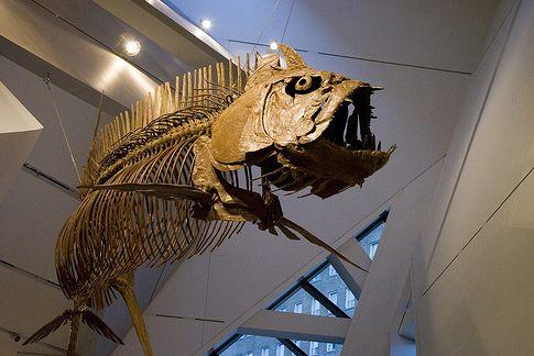 Скелет_доисторической_рыбы_в_королевском_музее_Онтарио