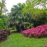 Ботанический сад Уилсонов