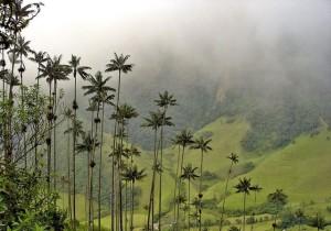 Долина_Кокора_в_Колумбии