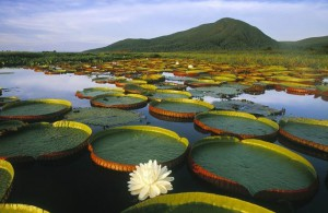 Озеро_Пантанал_в_Бразилии