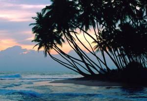 Пальмы_на_Барбадосе