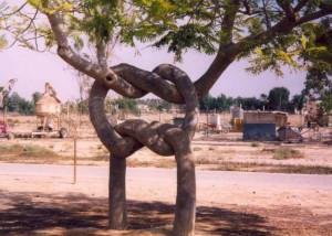 Цирк_деревьев_в_Америке