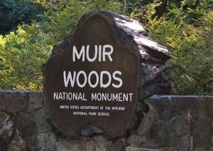 Национальный парк Муир Вудс
