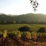 Долина виноделия Напа