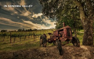 Sonoma Valley Wine