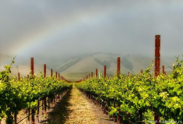 Sonoma_долина_виноделия