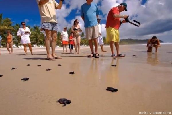 Пляж_Итакаре_Бразилия