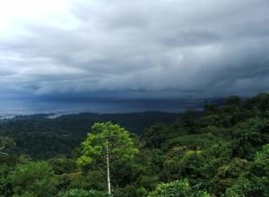 Природа_Суринам